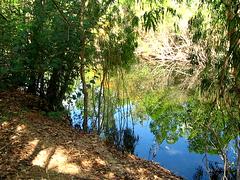 Finnis River (C) 2008