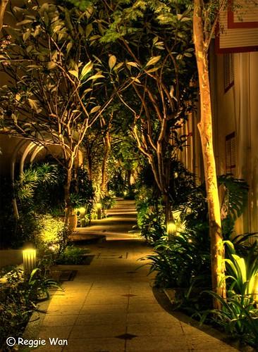 Back lane garden.