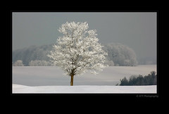 Frosted (ICT_photo) Tags: winter ontario tree golf frost guelph lonelytree bondhead dreamscapesoftoronto ictphoto ianthomasphotography theclubatbondhead ianthomasphtogaphy ianthomasguelphontario