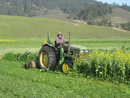 Mowing cover crop at Fat Cabbage Farm.