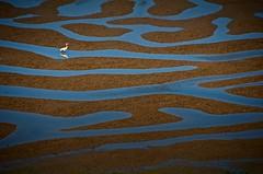 Mudflats of the Point Reyes Wilderness -- The Estero Trail (gcquinn) Tags: blue wild white nature point mud geoff flats national quinn geoffrey seashore egret reyes mywinners abigfave aplusphoto haroldross