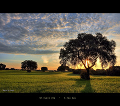 Un nuevo da - A new day (Marco Antonio Losas) Tags: trees primavera silhouette clouds sunrise spring rboles shadows country amanecer nubes campo fields cereals cereales sombras siluetas hdr daybreak olmedadelasfuentes nwn encinas holmoak encina comunidaddemadrid salidadelsol