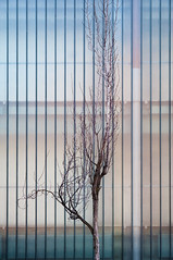 Tree Against Glass (pni) Tags: street tree nature glass wall suomi finland helsinki branch quiet trunk helsingfors skrubu pni manandenvironment pekkanikrus