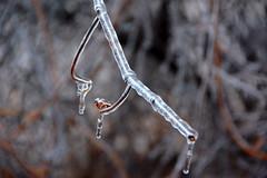 DSC_0057 (setao86) Tags: winter snow macro ice landscape frozen spring scenery frost icesickles