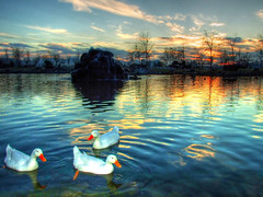 Meles Deltas... (Nejdet Duzen) Tags: sunset reflection pool turkey duck trkiye breathtaking izmir meles gnbatm rdek yansma havuz turkei 35faves abigfave platinumphoto anawesomeshot aplusphoto flickrplatinum favemegroup3 diamondclassphotographer flickrdiamond ysplix theunforgettablepictures 75faves goldstaraward melesdeltas hawaalrayyanfav beautifulsecrets