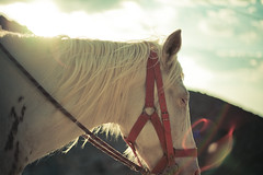 in the back of a memory (Luis Montemayor) Tags: sunset sky horse clouds mexico caballo atardecer dof cielo lensflare nubes realdecatorce dflickr dflickr180307