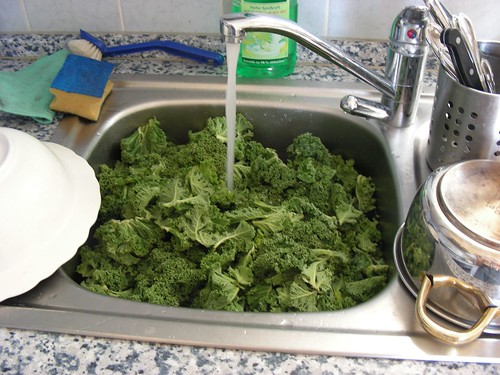 This sink is cleaner than mine, but equally full of kale.