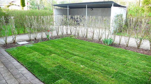 The new Lawn