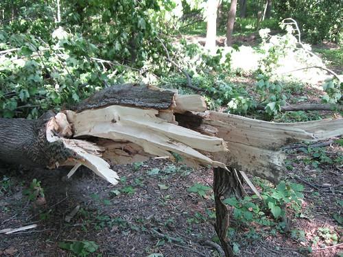 split wood 2