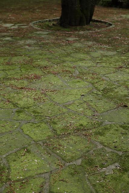 梅雨時コケの床