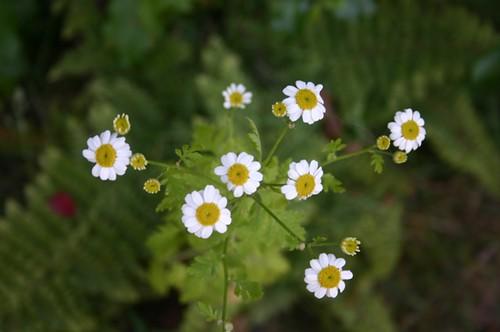 little blooms