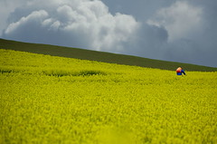 Coleseed biking (herman van hulzen) Tags: sky people bike bicycle clouds germany rapeseed coleseed hispics dietkirchen
