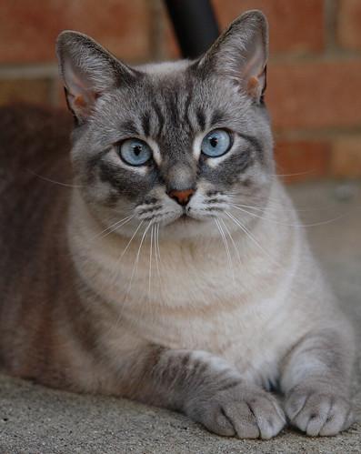 cat hermione murfreesboro