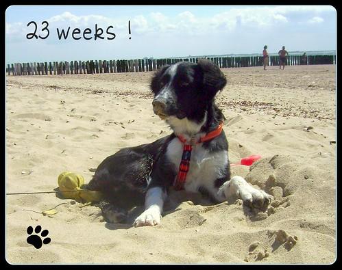 23 weken oud !