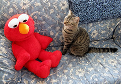 Tala meeting her friend Elmo! (veganmichele) Tags: blue friends pet cute animal cat toy tabby elmo efa veganetsy