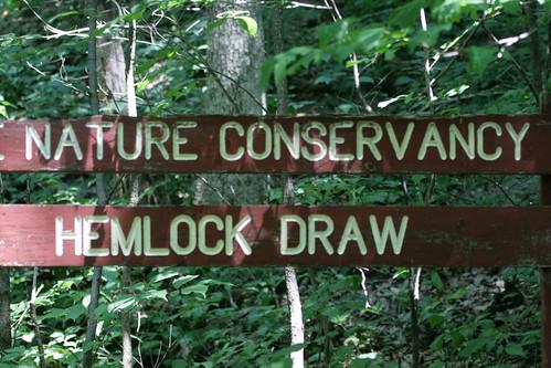 hemlock-draw