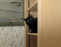 hello! (jennifer_loring) Tags: cats furry fuzzy kittens kitties felines nikita canong9 wuzzawuzzawuzza