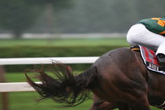 Parallel Evolution (Hank Fox) Tags: saratoga horseracing thoroughbreds