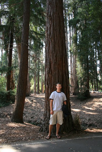 Romy and a Redwood