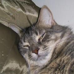 Fast Asleep (Vegan Butterfly) Tags: cute face animal cat fur jack sleep companion