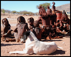 Family Dog (It's Stefan) Tags: africa people dog animal kids children bambini  culture kinder nios kind enfants namibia himba whitedog ninos epupa infantile  kunene enfent ovahimba blackears anthrpology    stefanhoechst stefanhchst