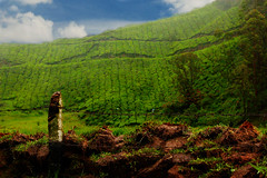 Green carpet !!!! (Dreamzzzz....) Tags: india rain kerala blueskies munnar teagardens tatateaestates