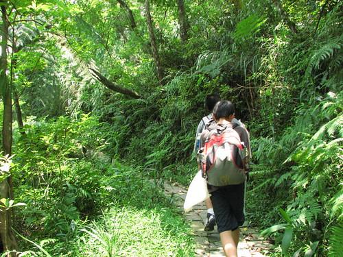 走在森林步道上
