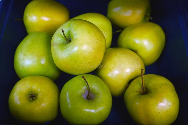 Manzanas Yucatecas