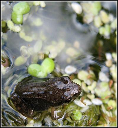 Froggie2 copy