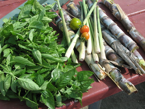 Sugar Cane, Lemongrass, Tomatoes and Basil