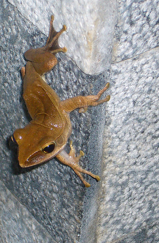 One tree frog on a wall