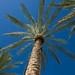 Scottsdale Palm