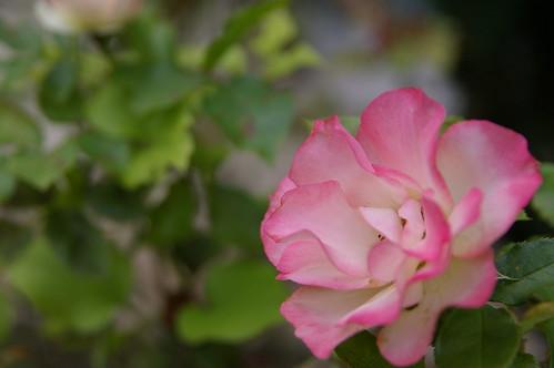 素瓊姐家花園03