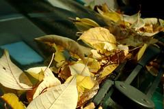 Chegou o OUTONO! (Ninphea) Tags: park italy parco milan folhas italia outono ouro ninphea