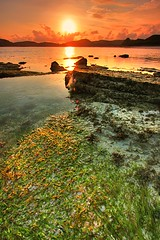 Golden Reflect (HDR) (Randi Ang) Tags: sunset sea sky sun seascape seaweed beach coral rock indonesia landscape an lombok hdr kuta tanjung