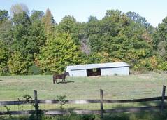 Horse 2008 10 21_2476