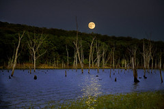 Night of the Bulls (Kansas Poetry (Patrick)) Tags: trees moon night escape searchthebest bulls soe clintonlake supershot mywinners shieldofexcellence platinumphoto fabulousshots