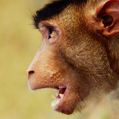 Shock the Monkey (DSC3449) (Fadzly @ Shutterhack) Tags: wild portrait detail face animal closeup d50 fur monkey nikon expression wildlife malaysia frodo paranoia terengganu petergabriel anotherdimension shockthemonkey nikonstunninggallery penarik lordsofthering shutterhack themonkeyinus