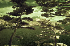 Fuji-san through Pines over Lake Shoji in Green (aeschylus18917) Tags: trees red sky mountain lake tree nature japan pinetree pine clouds landscape ir nikon scenery d70 nikond70 surreal mountfuji infrared  fujisan matsu  infra   pinetrees 1870mm mtfuji shoji yamanashi fujiyama pinus pinaceae    shojiko  1870f3545g yamanashiken shjiko yamanashiprefecture pinales shojilake lakeshoji  nikkor1870f3545g danielruyle aeschylus18917 danruyle druyle   1870mmf3545gifdx nikkor1870f3545gdx