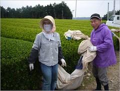 Getting Ready (Mighty Leaf Tea) Tags: japan tea mightyleaf