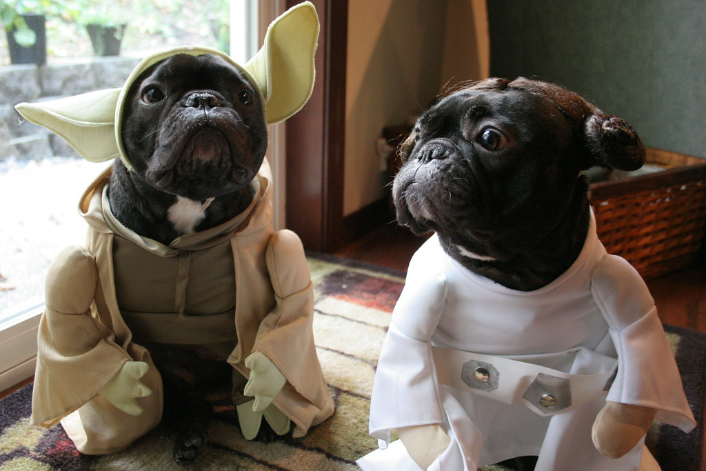 img1048 aquiggle tags dog pet halloween french costume zoey yoda bulldog goose