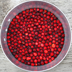 cranberry squircle