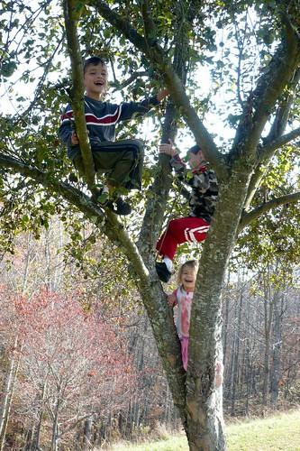 Three Kids in an Apple Tree