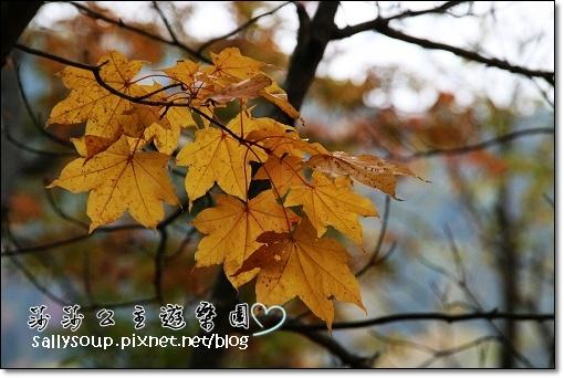 IMG_9123