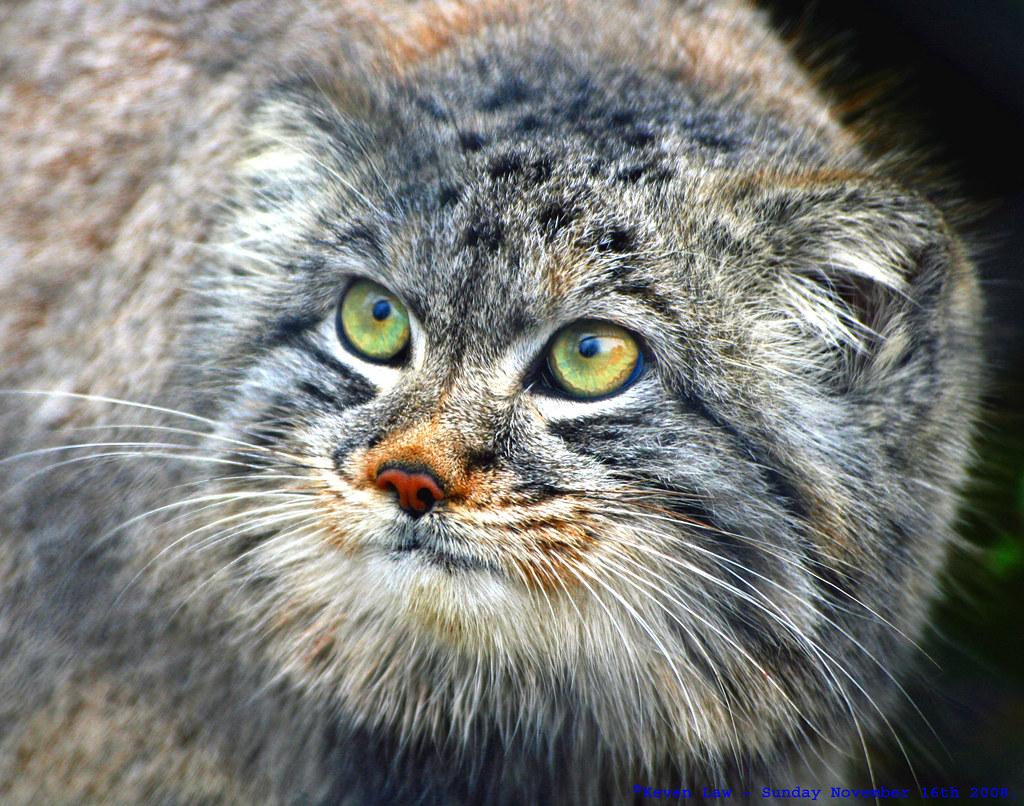 Фото редкий пиздун, Редкое фото Пикабу 4 фотография
