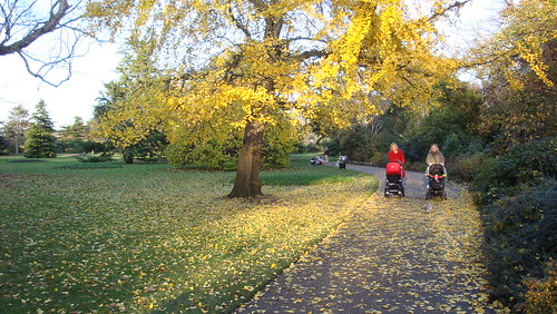 Fall's end in Greenwich (92)