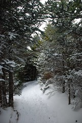 NC Snow (Glimpse of Life Photography) Tags: trees winter snow nature nc hiking path footprints trail pines christmastrees