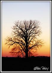 Sunset - Ohio (mikepetry) Tags: city sunset ohio tree silhouette plain whereismike mikepetry