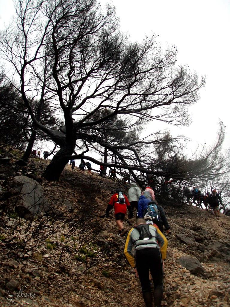 Trail de Noel Ollioules 2008 (87)