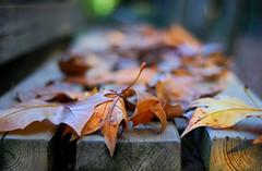 Tardor efímera (SlapBcn) Tags: autumn dof bokeh otoño slap tardor theshining nikkor50mm18 efimera desenfoc nikond80 slapbcn fueradelaciudadhaycolor
